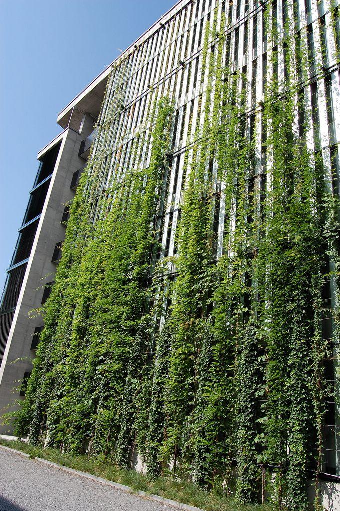 vertical green wall green facades pinterest