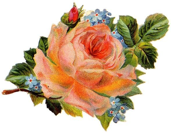 Vintage Floral Label Art Print Card