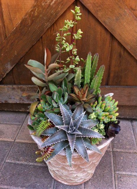 Succulent arrangement by chicweed succulent ideas for Garden arrangement