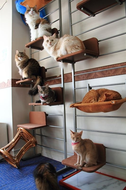 Crazy Cat Lady for sure. I want the post with the tiny beds for cats ... OH and I want ALL the cats. ALL of them. This is awesome.
