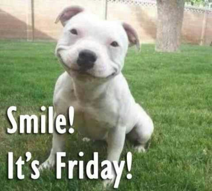 Smile It s Friday Happy Friday Animal