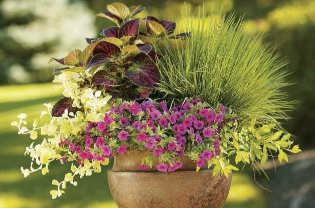 Pin by brenda gordon on garden plant ideas pinterest - Large container gardening ...