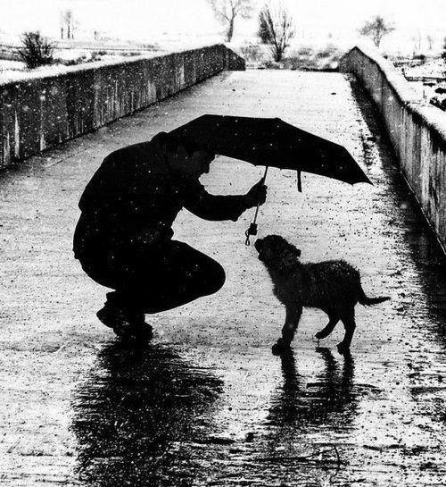En algún lugar bajo la lluvia siempre habrá un perro abandonado que me impedirá ser feliz...