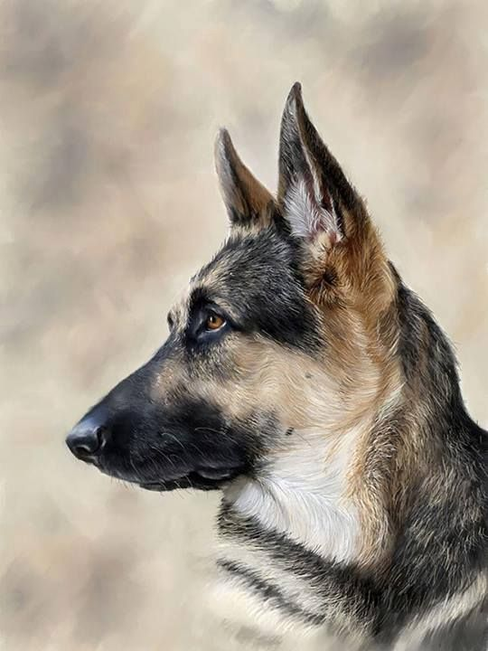 Wow beautiful german shepherd art art pinterest