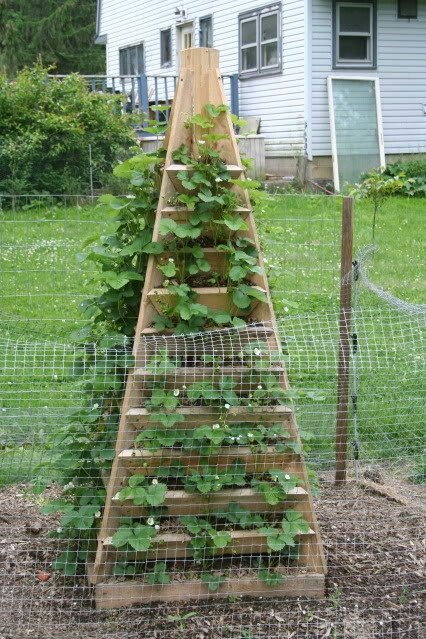 Strawberry plant pyramid gardening ideas pinterest for Strawberry garden designs
