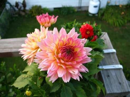 Shade perennials garden pinterest - Shade tolerant flowers ...