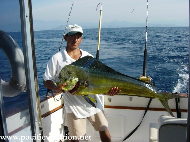 Pin by pacific vacation on deep sea fishing zihuatanejo for Deep sea fishing mexico