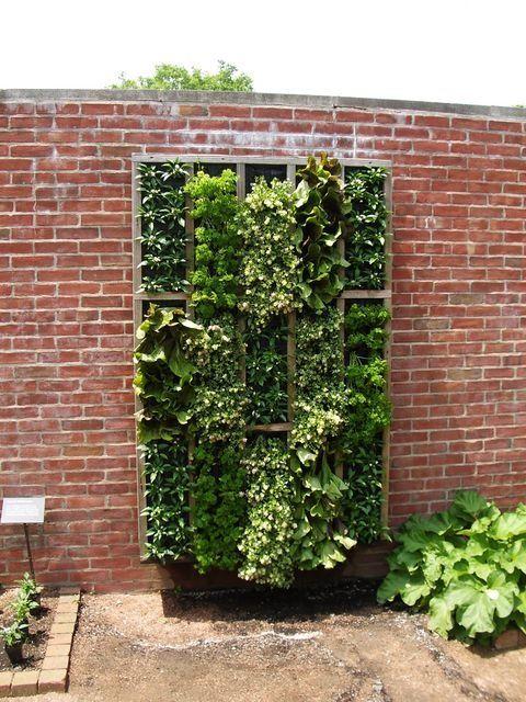 Vertical Lettuce Herb Garden Garden Pinterest
