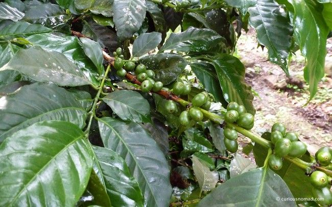 25 Unique Coffee Experiences From Around the World, Part 1 - eTramping.com