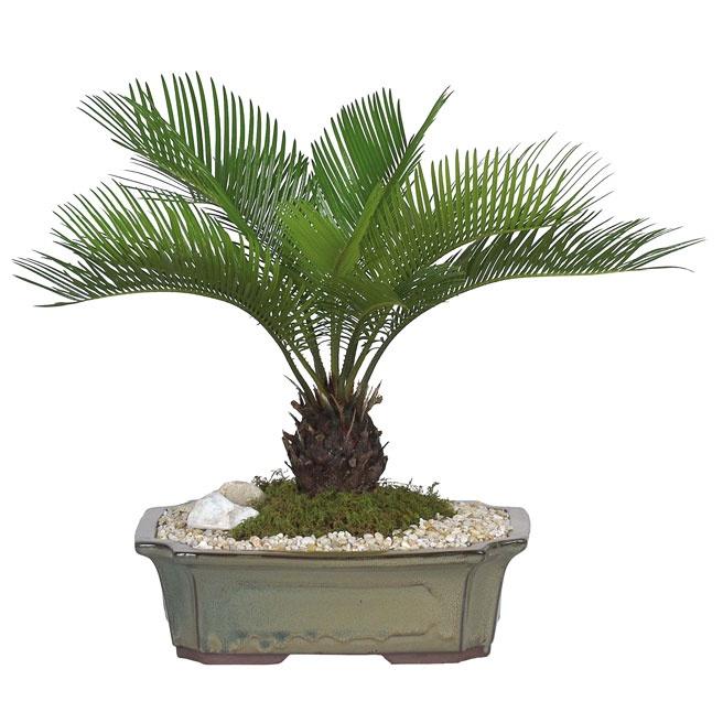 All Tropical Palms Nursery Gilroy, CA