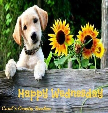 Happy Wednesday Quotes For Facebook. - 44.2KB