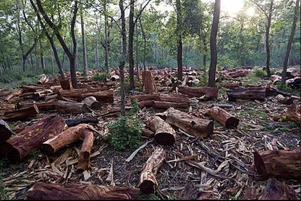 deforestation argumentative essay