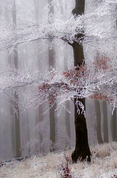 ✮ The first breath of Winter