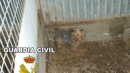 www segunda mano es: