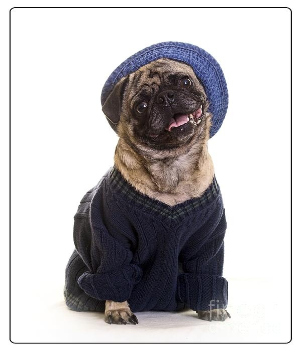 Pug in sweater and hat Print by Edward Fielding: pinterest.com/pin/282249101618557762