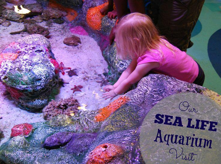 Sea Life Aquarium Grapevine Tx