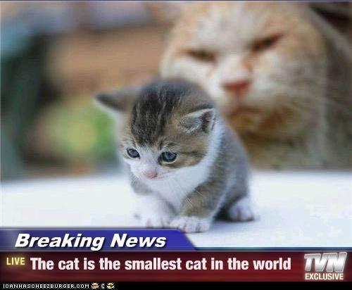 Pin by sydney spellman on birthday pinterest - Smallest cat in the world guinness ...
