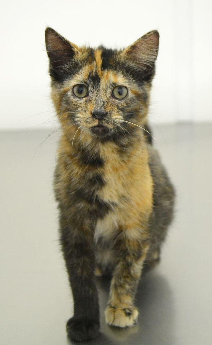 14++ Chatham county animal shelter ideas