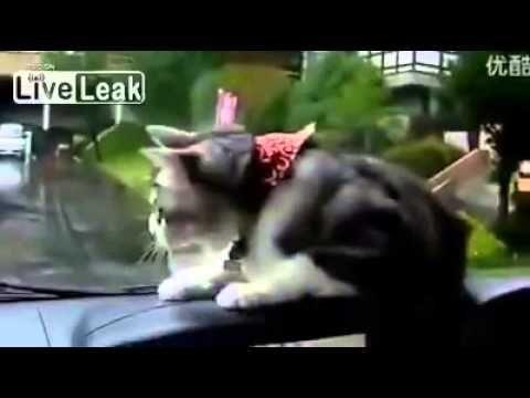 site c cat Wipers C C.oap