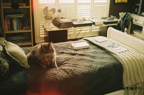 The cat makes the room better.