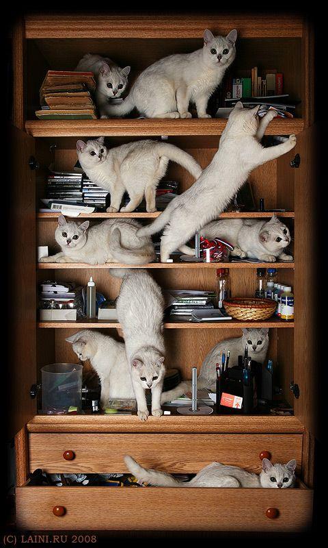 Crazy Cat Lady's Bookshelf.