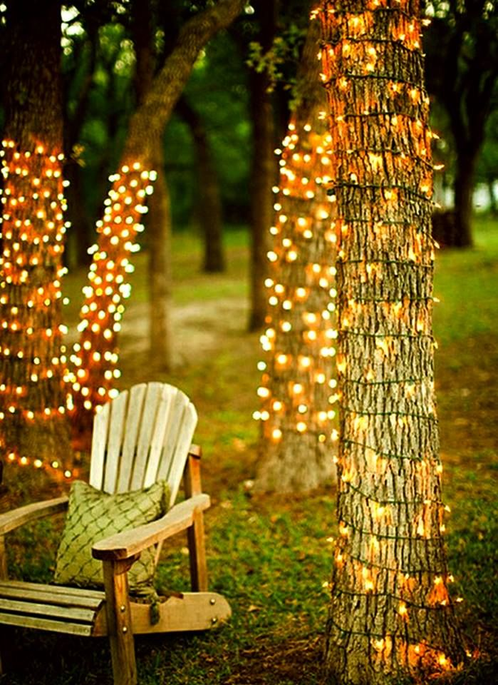 Outdoor Twinkle Lights Wrapped Trees