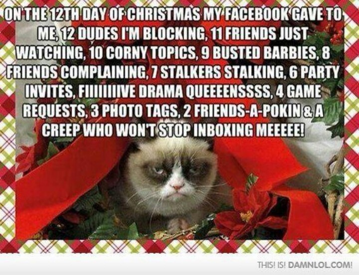angry cat valentine's day