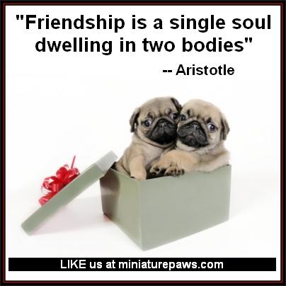 Τι λέγει ο Αριστοτέλης για την φιλία;