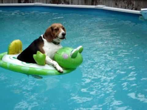 Dog on floatie | My Small Dog(s) | Pinterest