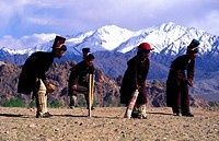 India, Jammu and Kashmir State, Ladakh Himalaya, Sabu children playing cricket 3500m