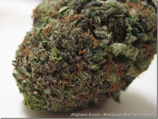 cannabis legalisation essay