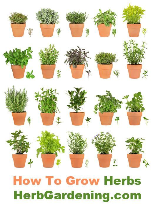 Herbs in containers are easy to grow garden ideas for Easy to grow outdoor plants