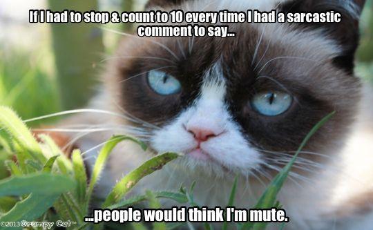 Use your words grumpy cat pinterest