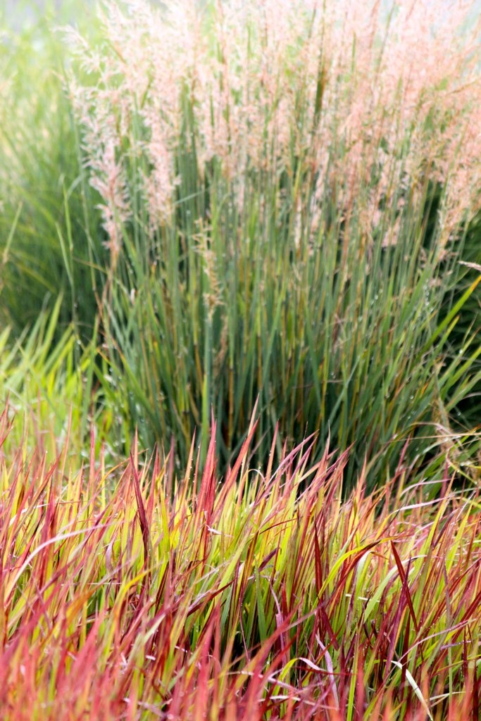 Red Green Decorative Grass Garden Inspired Pinterest