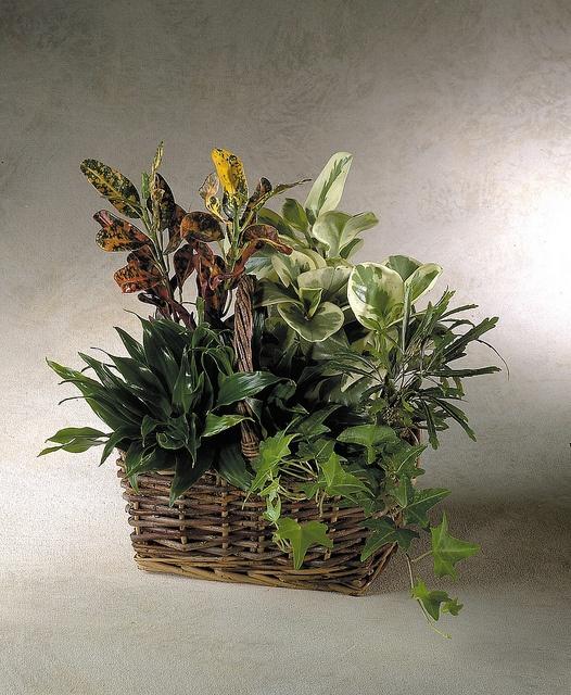 Dish garden foliage bowl ideas pinterest for Dish garden designs