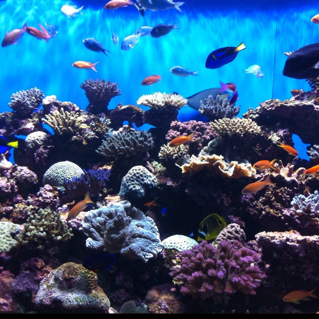 Birch Aquarium In La Jolla Ca Ocean Life Pinterest