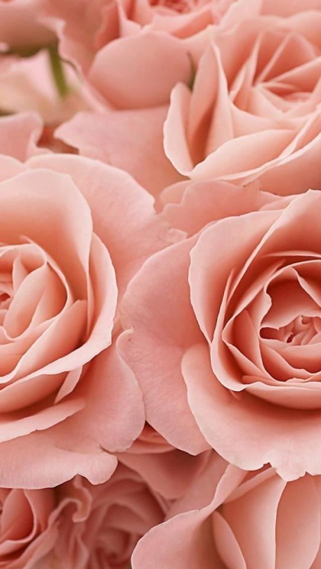 pink roses iphone wallpaper wallpaper pinterest. Black Bedroom Furniture Sets. Home Design Ideas