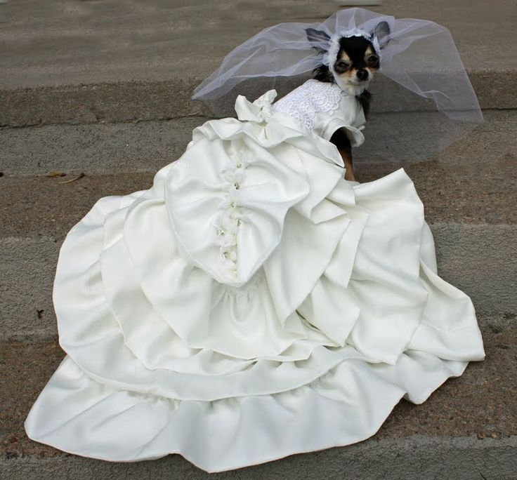 What A Gorgeous Wedding Dress Chihuahua Novios Brides