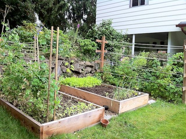 raised bed and raspberry trellis Gardening Pinterest