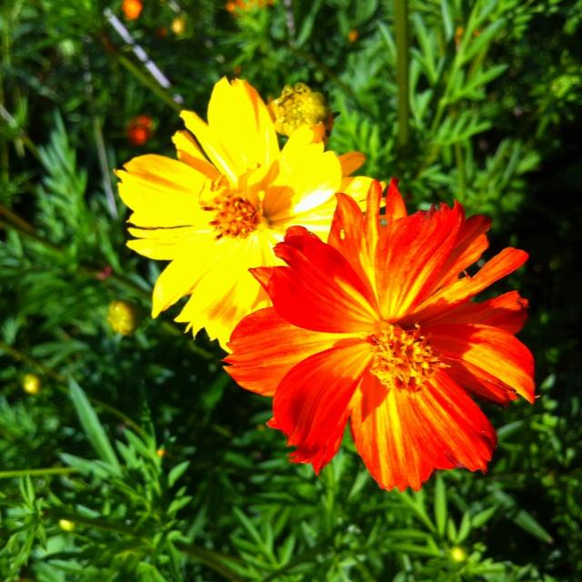FLOWER FLOWERの画像 p1_31