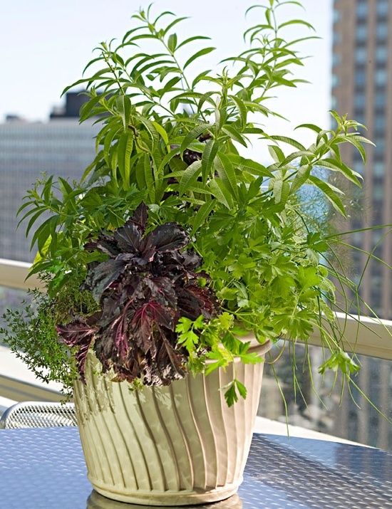 Plant a beginners herb garden For the Home Pinterest
