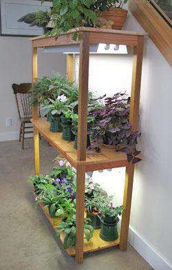 Fluorescent light garden gardening indoors pinterest for Indoor gardening diana yakeley
