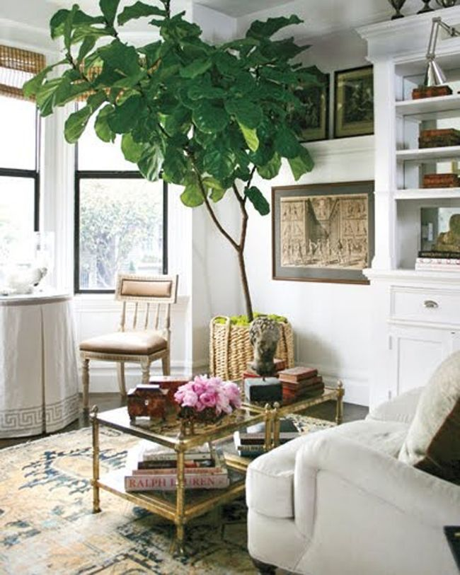 oversized woven baskets / fiddle leaf fig trees