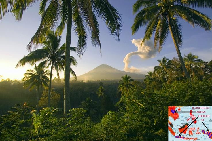 Asian Tropical Rainforest 105
