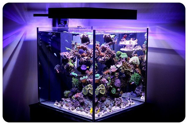 Any aquarium guys here sportstwo for Cube saltwater fish tank