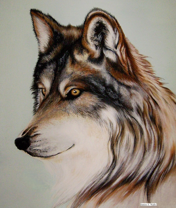 Wolf Stare acrylic painting Acrylic Paintings