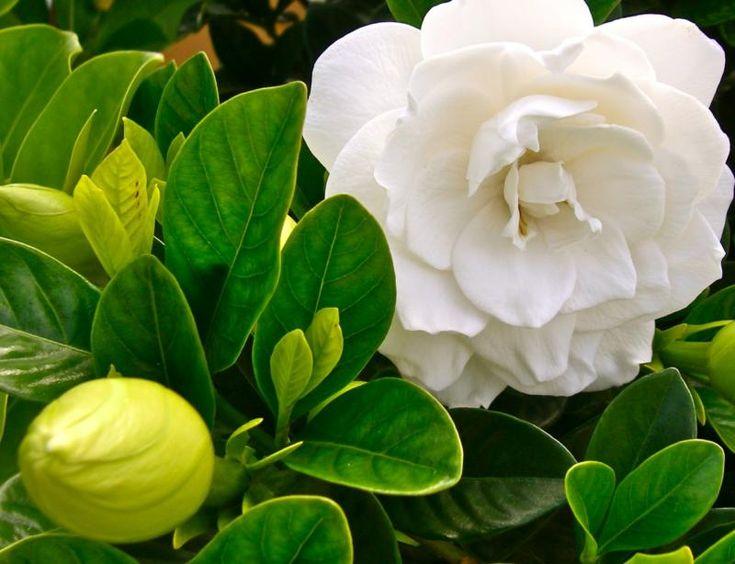 Five Fragrant Flowers