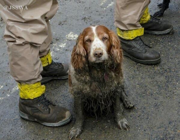 Twitter abc abc news 4 paws and an amazing nose tired muddy warriors