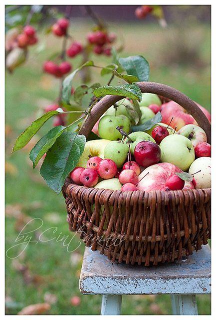 Basket of Apples ...