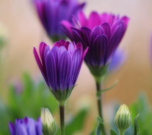vibrant purple